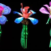 chudaki-bouquet